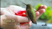 Хранене на колибри от човешка ръка.