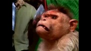 Маймуна с мисия
