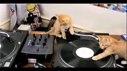 Котета Dj-и !