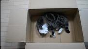 Котето Мару играе с топче във кашон...