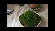 Зелени листа, здрави и свежи, така изглеждащи и растения, отглеждани по интересен начин