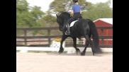 арабски кон