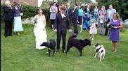 Wedding Fail!!! - куче се изпикава на булката !!!:d:d