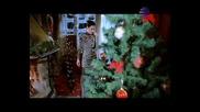 Траяна - Свикнала съм - На Коледа 2011