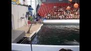 delfinariuma v varna