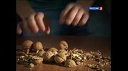 Орехотрошачка - Denis Cyplenkov!