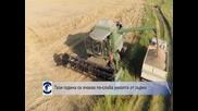 Тази година се очаква по-слаба реколта от зърно