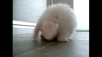 Най - Малкото И Най - Сладкото Зайче
