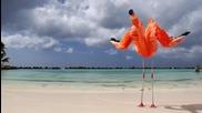 Aruba- 19 мили на щастието - 4k