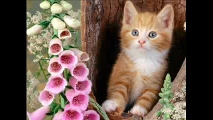 Sweet~and~cute