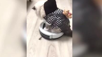 Смешни и щури котки правят уникални гафове