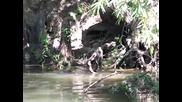 Змия срещу змия в джунглата (авторски