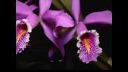 Море от красота - Орхидеи