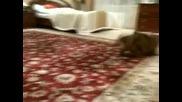 Досадното кученце срещу голямата котка .