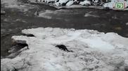 Видра ловува в река Бистрица