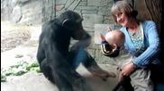 маймуна се опитва да удари бебе :)