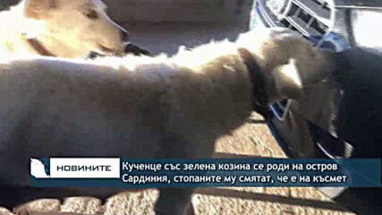 Кученце със зелена козина се роди на остров Сардиния, стопаните му смятат, че е на късмет
