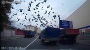 Банда гълъби разбойници нападат камион
