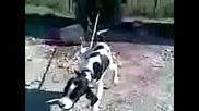 куче се моли за мекица