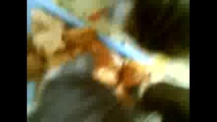 Malki kotki qdyt za pruv pyt ot 4inika