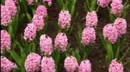 Честита първа пролет приятели!
