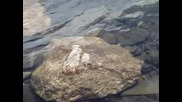 Бъбрека - едно от Седемте рилски езера/ Субтитри /