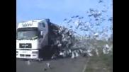 Как пускат птиците на свобода