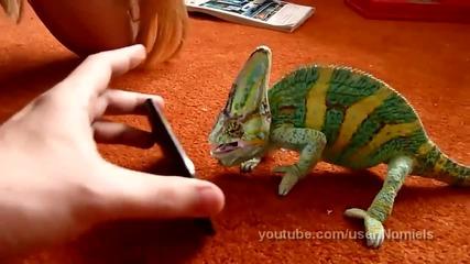 Хамелеон срещу Iphone. Много Смях! - Vbox7