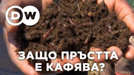 Защо почвената покривка на Земята е кафява?