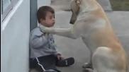 Невероятно отношение на куче към болно дете, ще ви разтопи сърцата.