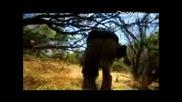 Man vs. Wild Sierra Nevada Chaparral