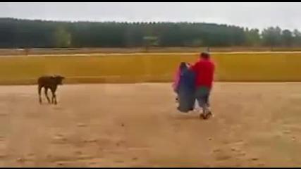 Биче изненадва матадора