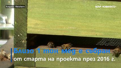 Хърватски град с рекорден брой Мерцедеси и германски затворници се грижат за пчели