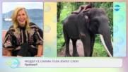 Модел се снима гола върху слон - Проблем?! - На кафе (09.03.2021)