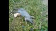 The Death - Drunk, Punk Mouse(troyan)