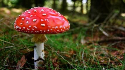 9 удивителни факта за отровните растения и гъби
