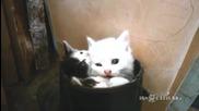 Котета се чувстват много комфортно... в ботуш