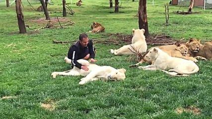 Тигър спасява служител на зоопарк от атаката на леопард