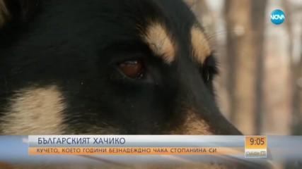 """БЪЛГАРСКИЯТ """"ХАЧИКО"""": Кучето, което чака починалата си стопанка"""