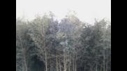 Бамбукова Горичка