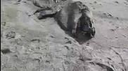 Мистерия: Вълни изхвърлиха на плаж морско Чудовище ( Видео )