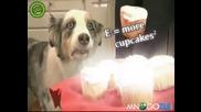 Ненормален поглед на куче