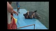 Делфин изнасилва човек :д