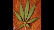 hause marihuana