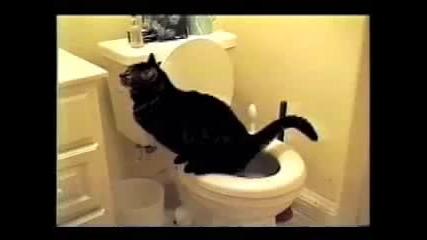 Най - смешните котки на света 2 част