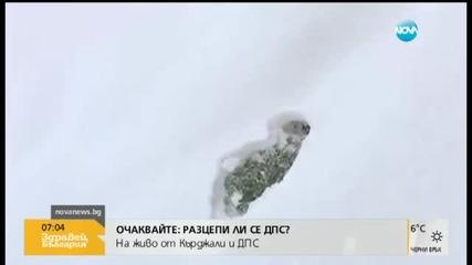 Защо кучетата чихуахуа не трябва да тичат в снега?