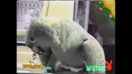 Папагал Се Прави На Бебе - Смях..!