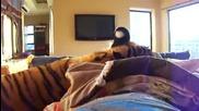 Тигър лежи в легло