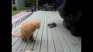 Катеричка краде фъстъците на котето