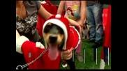 Коледен парад за кучета в Лима